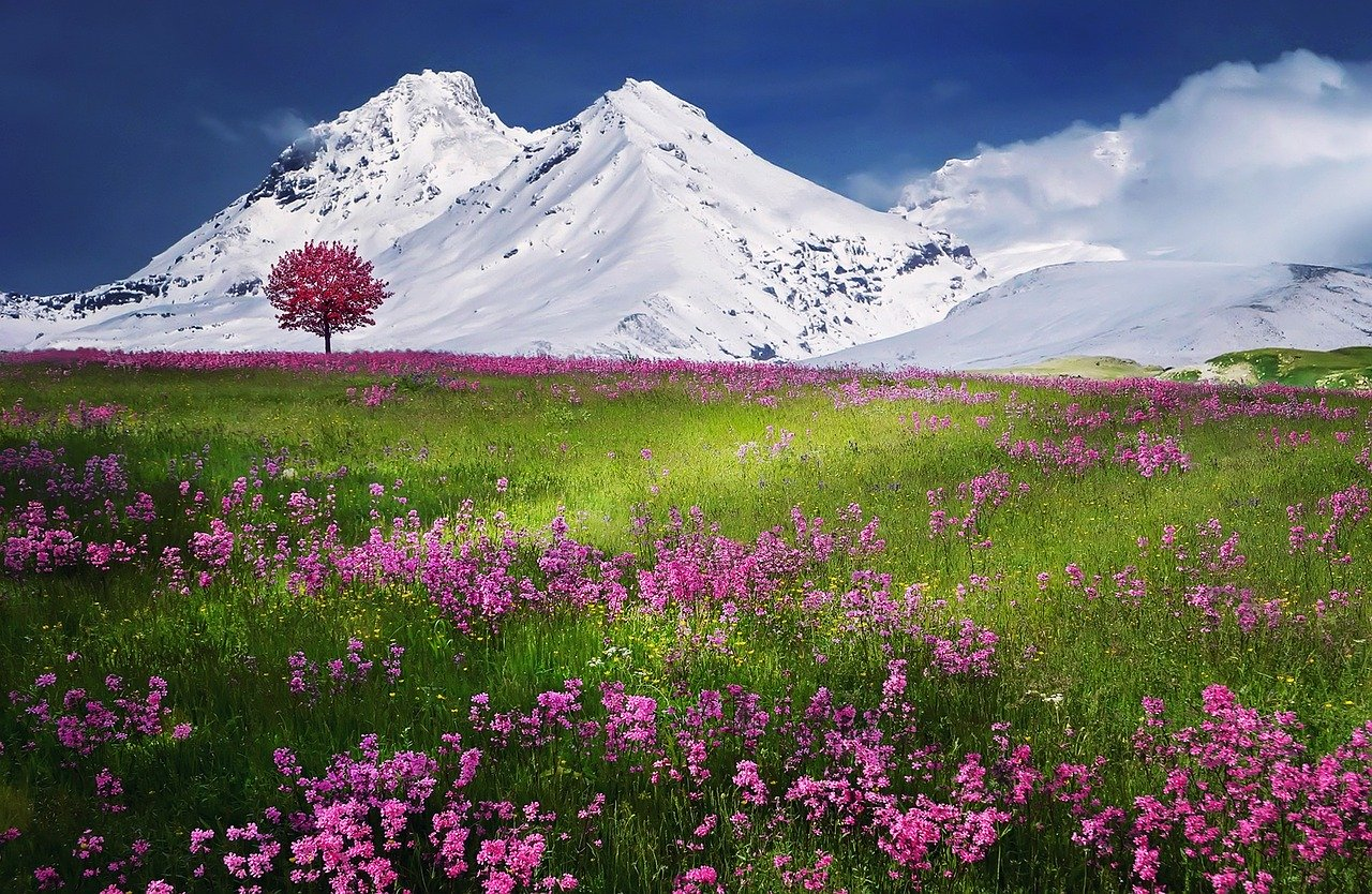 mountains, alps, meadow