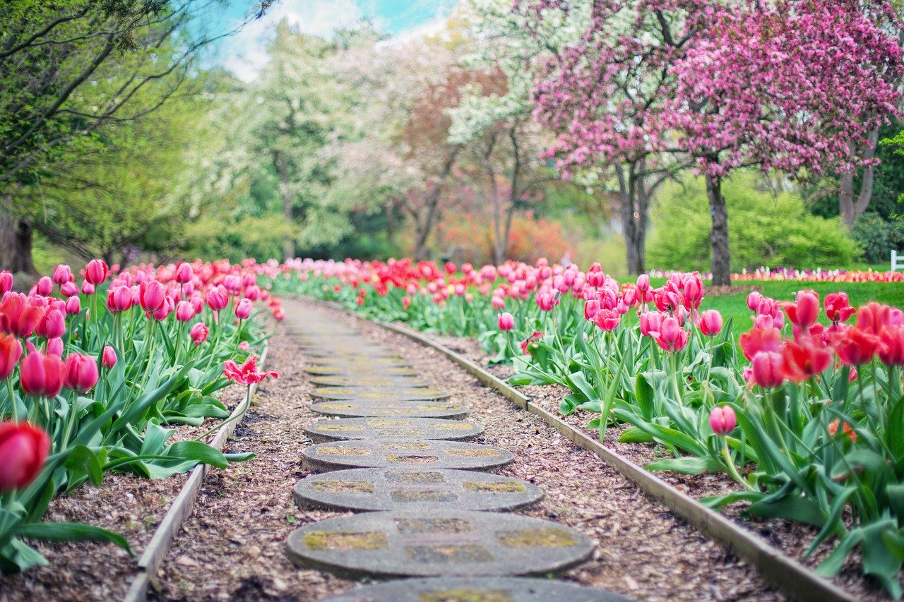pathway, path, pink tulips
