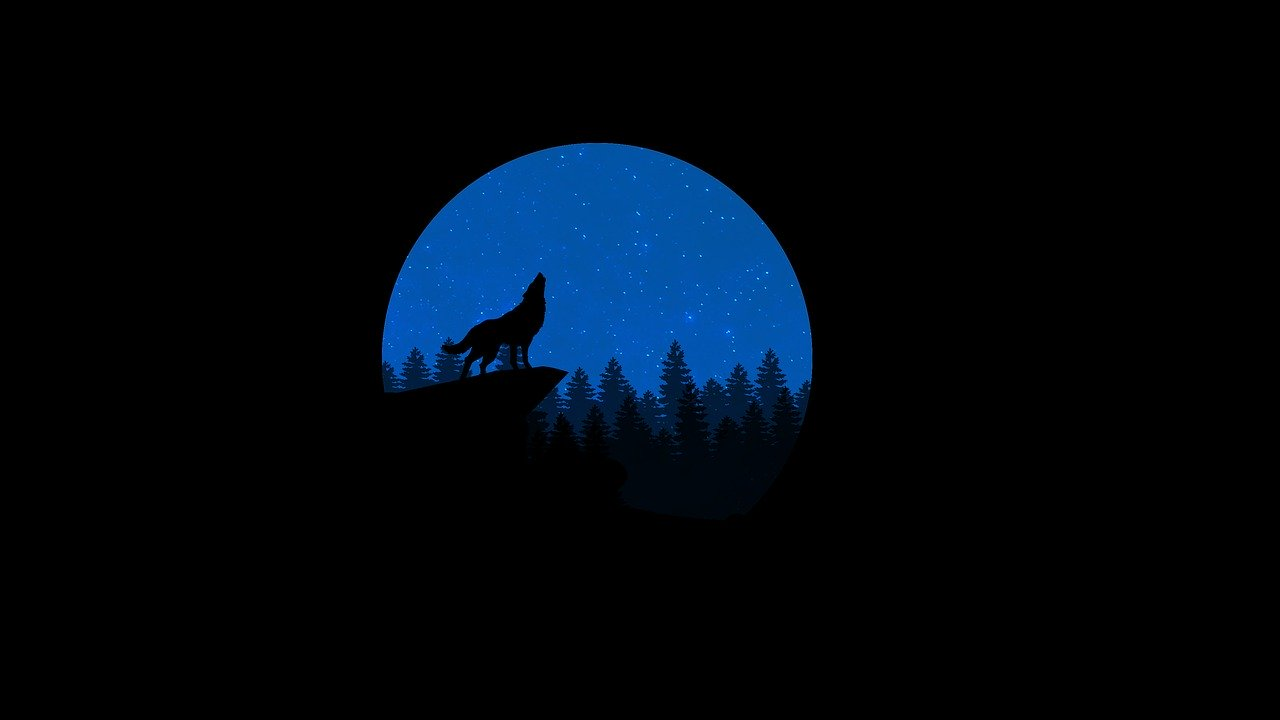 wolf, howling, night