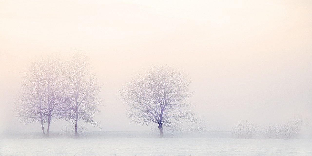 winter landscape, trees, snow
