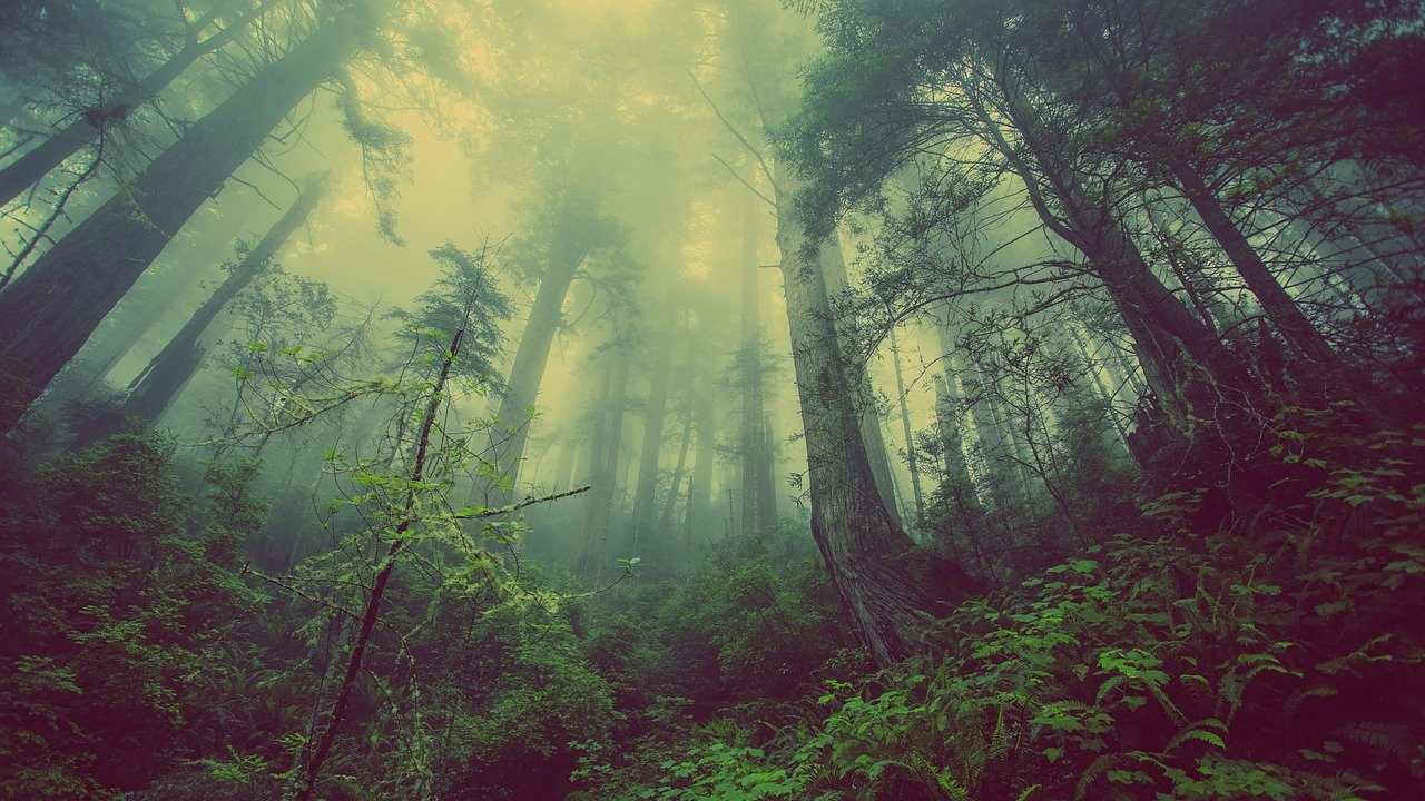 forest, mist, nature